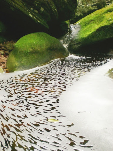 Formas de la naturaleza (Brasil)