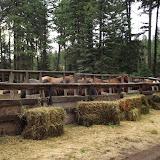 Camp Baldwin 2014 - DSCF3624.JPG