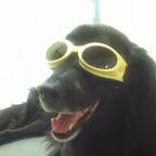 Maverickdog.JPG