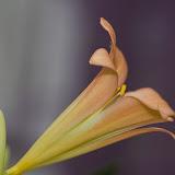 Abstraktes aus der Blumenwelt...