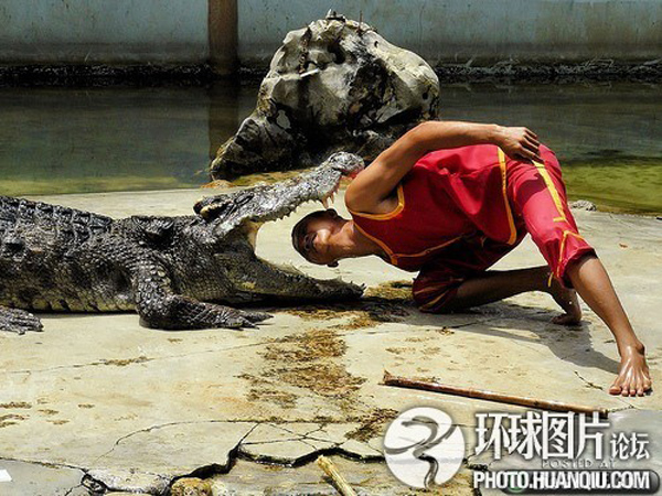 Craziest Job in The World | Crocodile Wrestler