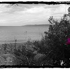 20120702-01-grass-flower-beach.jpg