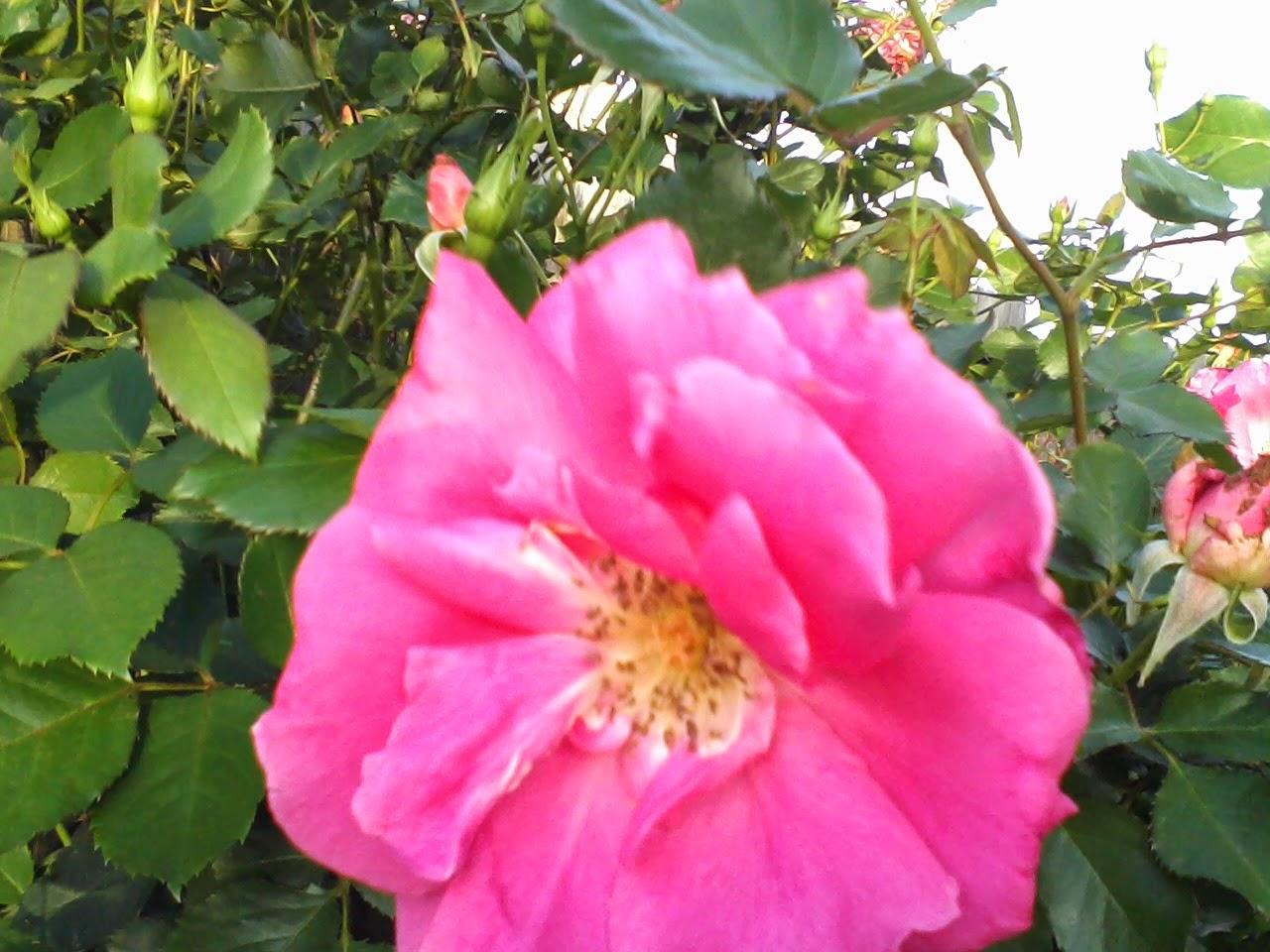 Gardening 2014 - 0412185852.jpg