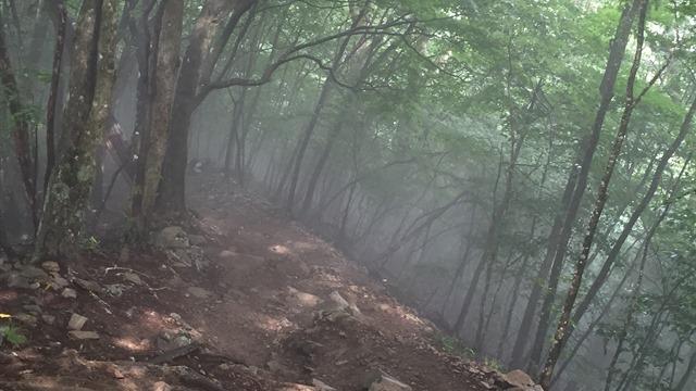 森を歩く(セラピーロード)
