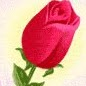 Rose Halloran