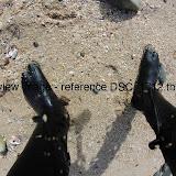 DSC_1712.thumb.jpg