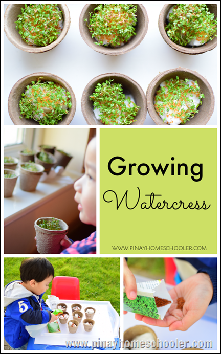Watercress Montessori