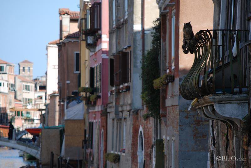 Gatti veneziani 13 05 2010 N 2