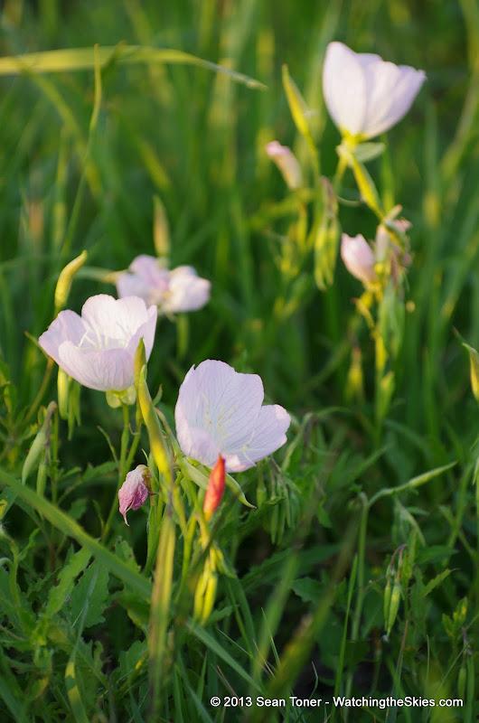 2013 Spring Flora & Fauna - IMGP6340.JPG