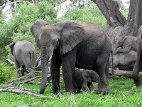 Elephant Family - Linyanti Concession (Chobe Region)