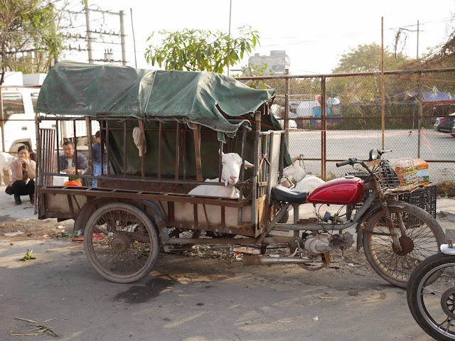 motorbike tricycle cart with a goat