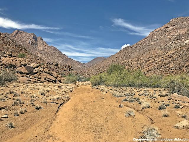treeking-brandberg-namibia.JPG