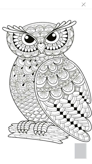 Best Ideas About Owl Coloring Pages On Pinterest  Owl Drawing Easy Coloring  Pages To Print And Paper Size