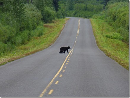 Two bears along Cassiar Highway