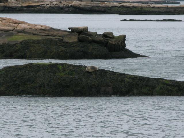 Seal Cruise - seal17.jpg
