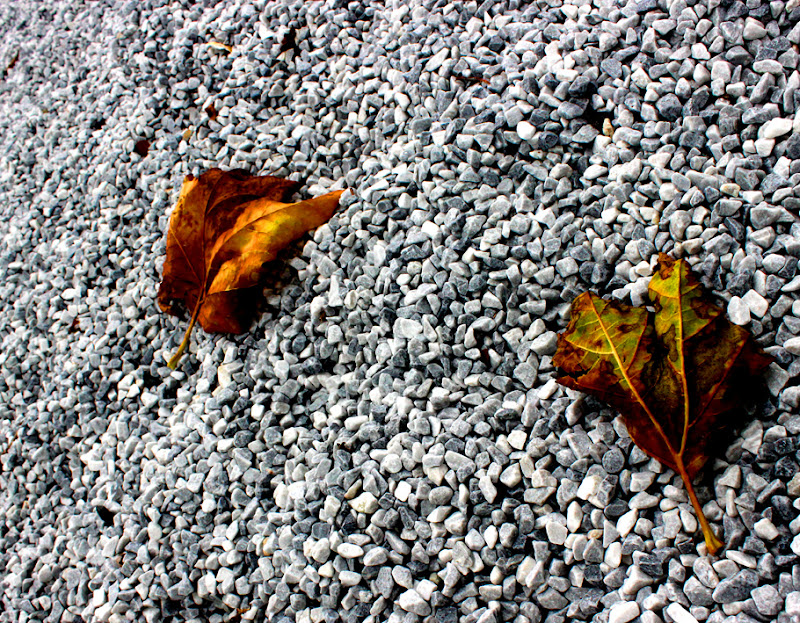 four seasons: autumn leaves~ frank waaldijk
