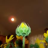Bouquets - 115_2915.JPG