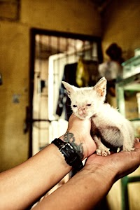 Kitten found on the Streets