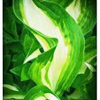 20120606-01-green-flowerbed.jpg