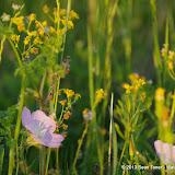 2013 Spring Flora & Fauna - IMGP6343.JPG