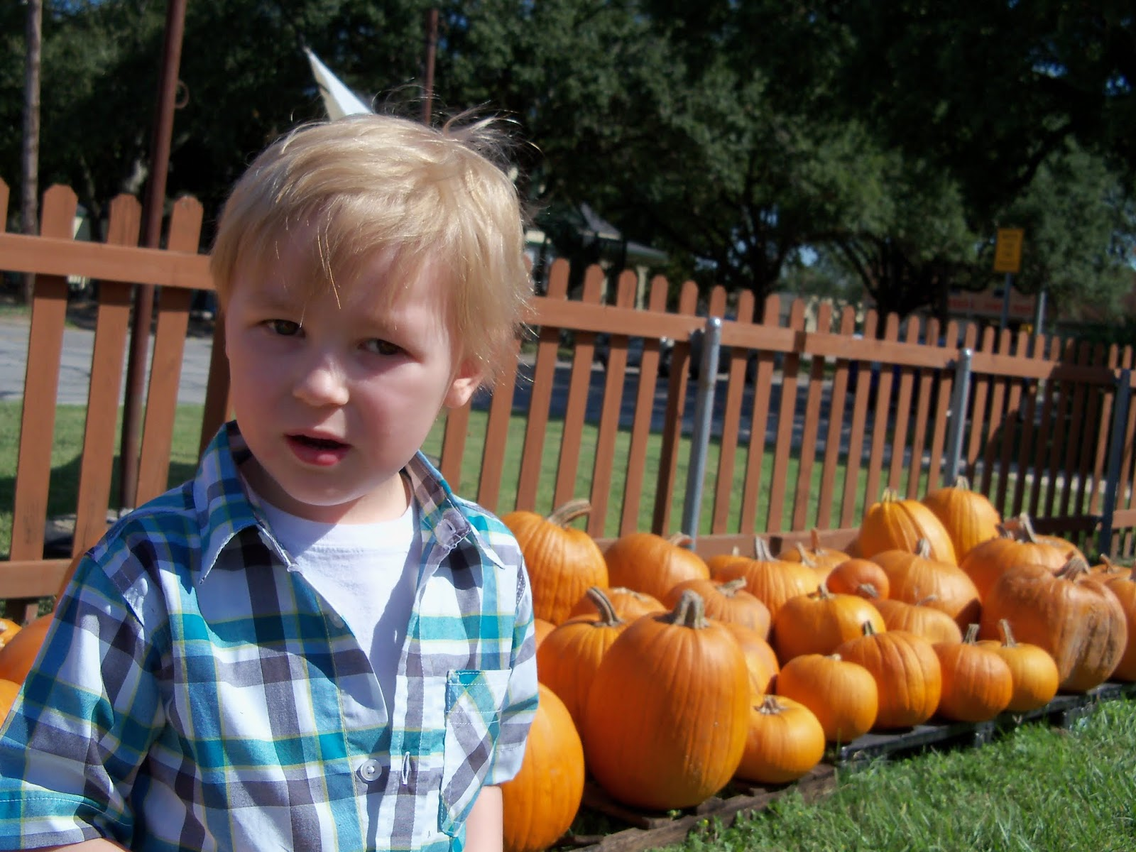 Pumpkin Patch 2015 - 100_0430.JPG