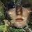 Hedija Sehovic's profile photo