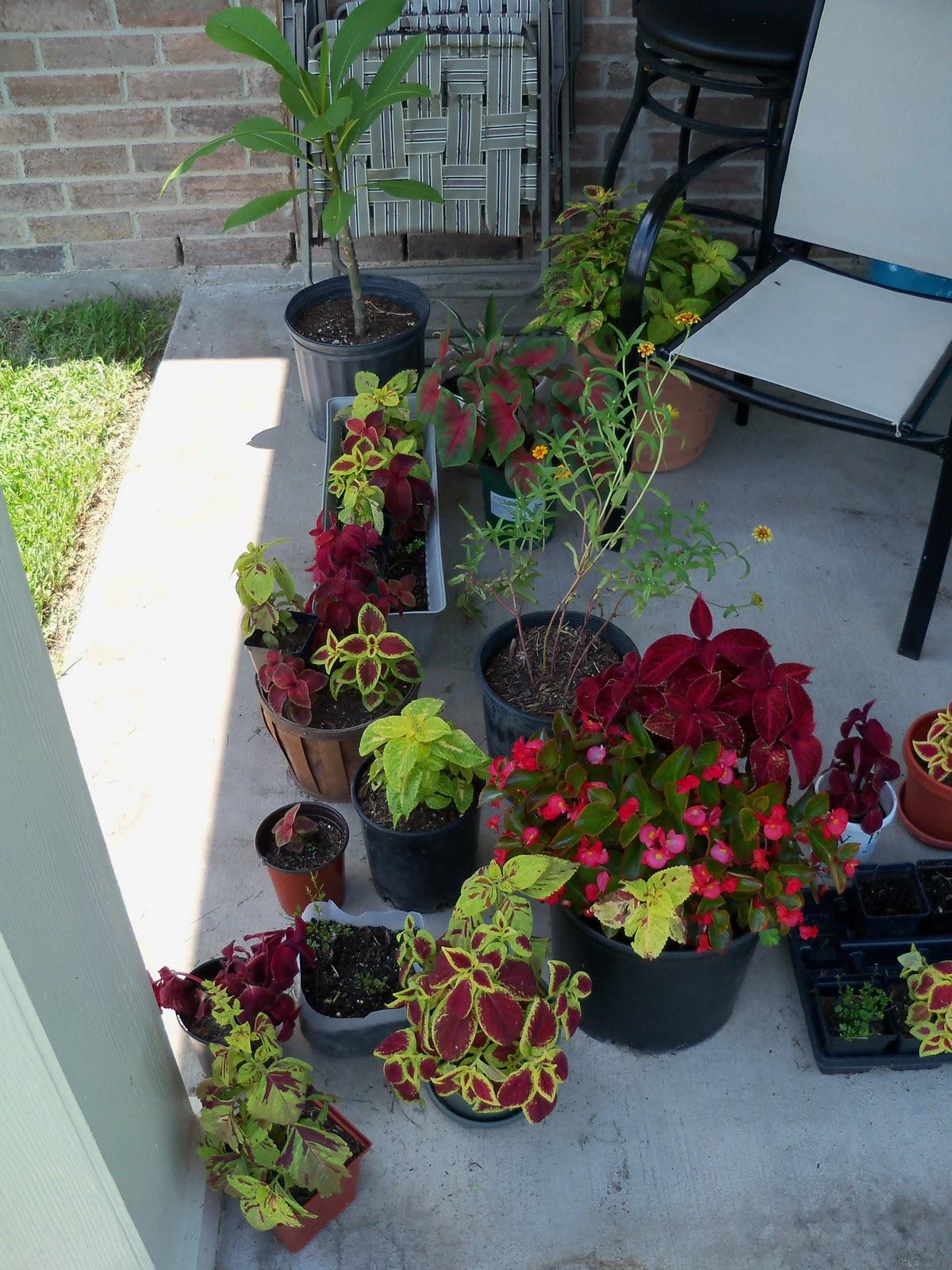 Gardening 2010, Part Three - 101_4901.JPG