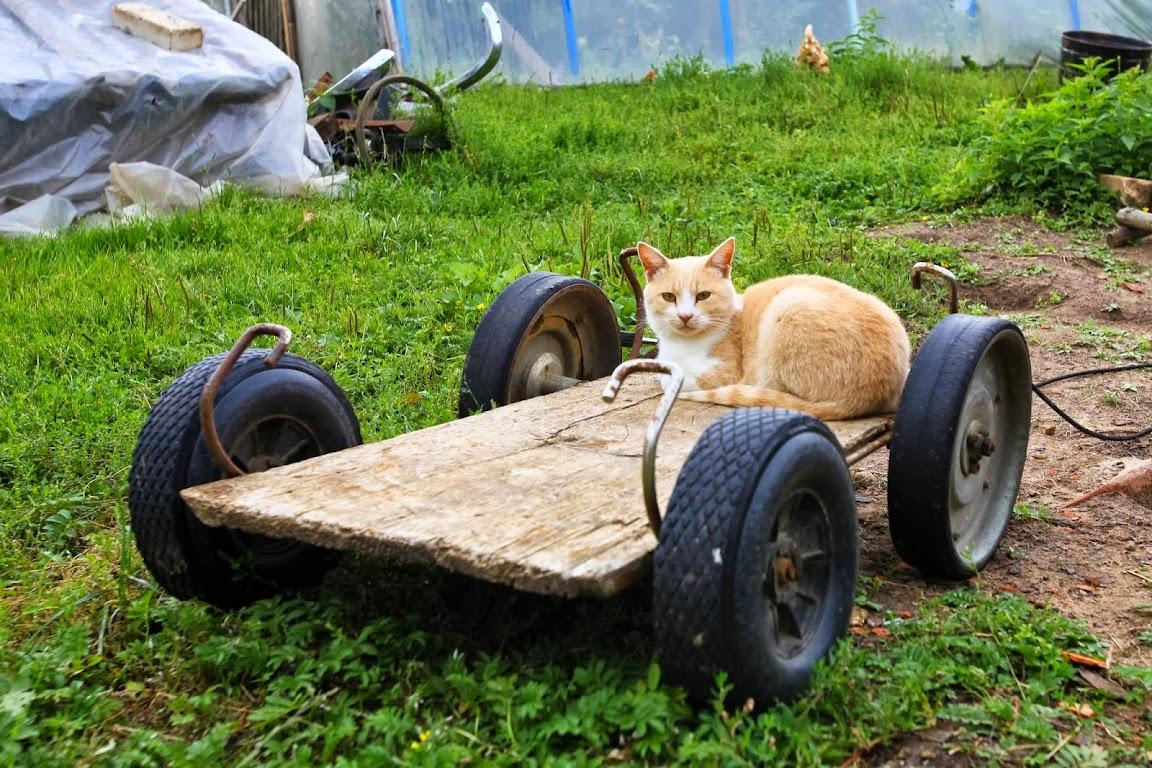 кот на тележке