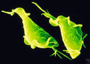 травы от паразитов в организме человека