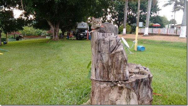 fredy-tronco