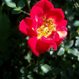 Gardening 2012 - 115_1544.JPG