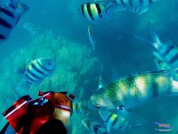 pulau harapan, 29-30 agustus 2015 SJCam 07