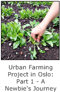 urban farming project in oslo - part 1 - a newbie's journey