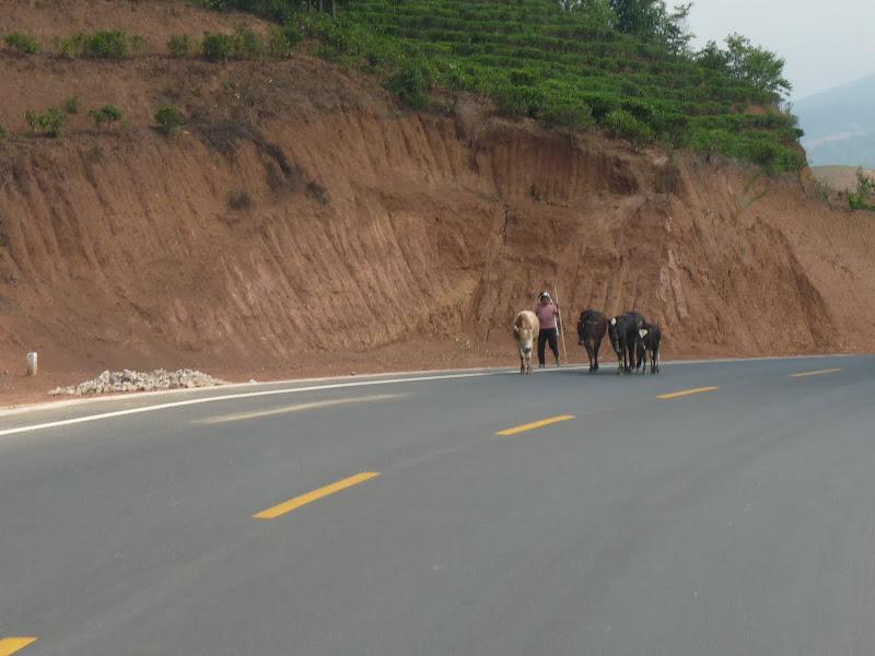 Chine . Yunnan..Galamba, Menglian Album A - Picture%2B180.jpg