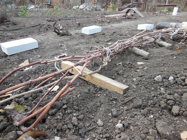Способы укрытия винограда