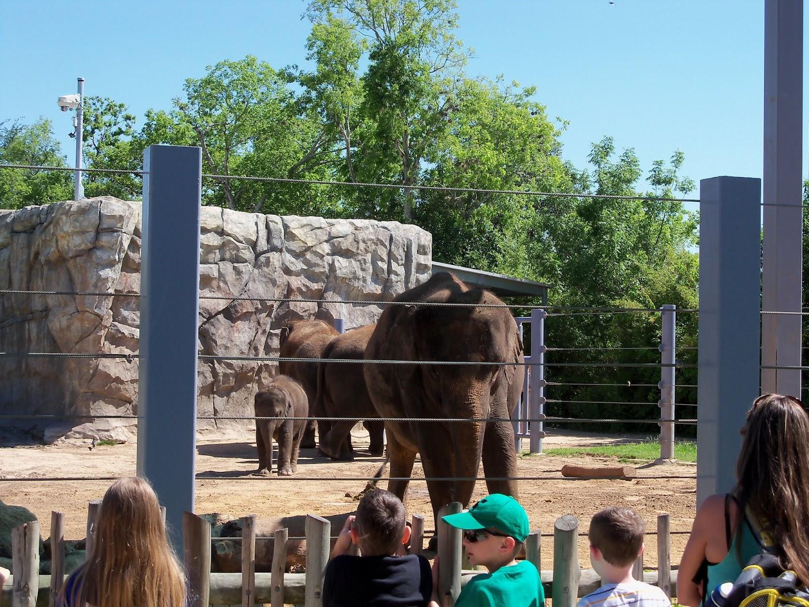 Houston Zoo - 116_8414.JPG