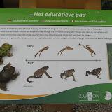 Сравнительная таблица. Жабы и лягушки.