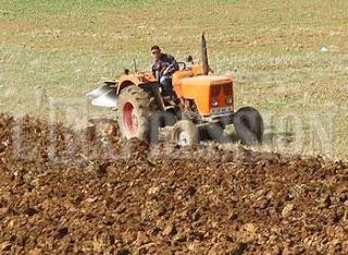 Agriculture : Hausse de la production céréalière à El Oued