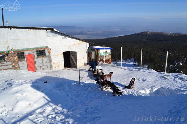 собаки_монастыря_sobaki_monastyrya