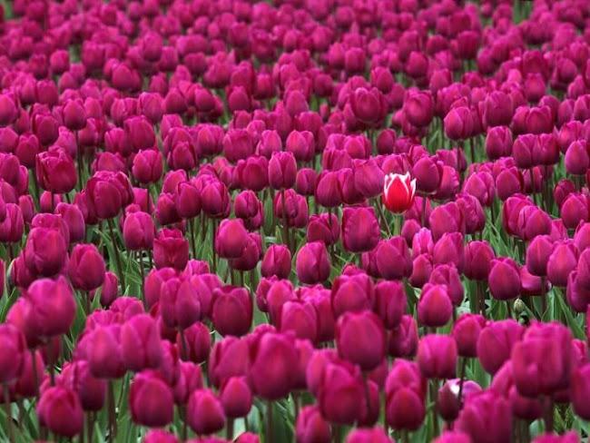 Florist Marcoola: Preferred Flowers Sold Nowadays