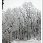 erdő, zúzmara 022.jpg