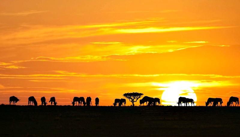 Anochecer en el Parque Nacional de Serengueti