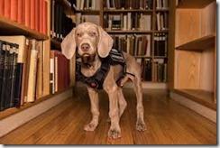 MFA puppy
