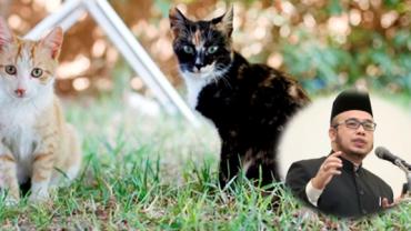 Anda Boleh Buang Kucing Jiran Jika Selalu Ganggu Rumah