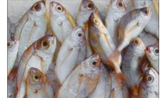 बिहार में जहरीली हुई मछली अब तक तीन की मौत