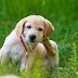 Dog Mange  (Itchy Scratching)