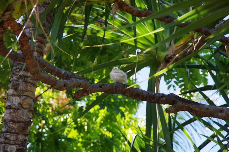 06-17-13 Travel to Oahu - IMGP6866.JPG
