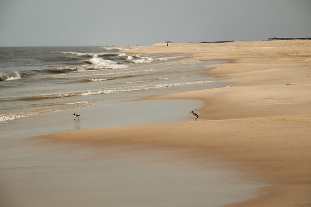 assateague 2