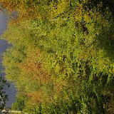 Chemin forestier, les Hautes Lisières, 8 octobre 2009. Photo : J.-M. Gayman