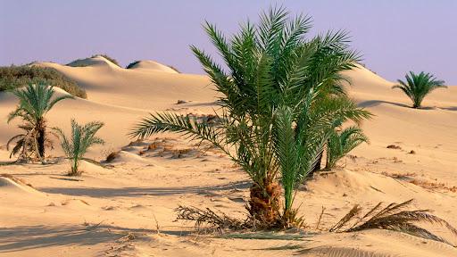 Oasis Dakhia, Sahara Desert, Egypt.jpg